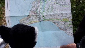 Felix from Purina, checks the map on the Isle of Wight