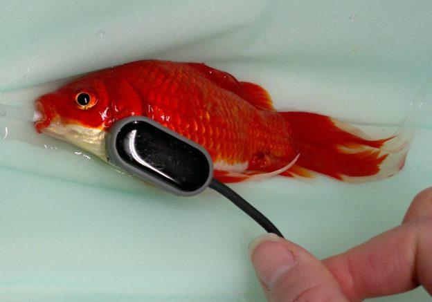 fish2 624x437 - Brain Salad Surgery and the CAT Doppler
